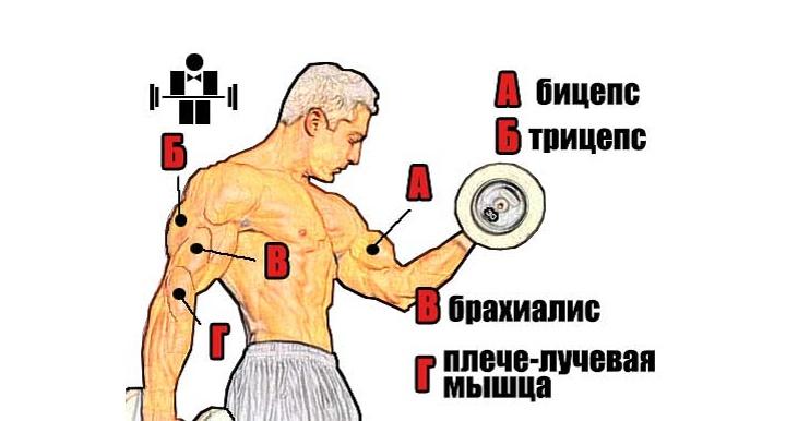 мускулы на руках